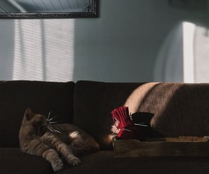cat, cozy, and knitting image