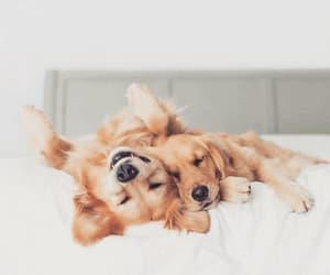 animal, dog face, and doggie image