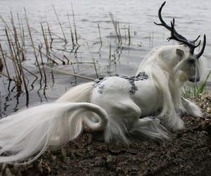 unicorn, horse, and magic image
