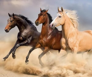 animals, cute, and horses image