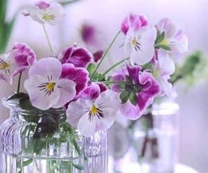 Violets~