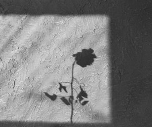 black and white and shadow image