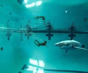 indie, sharks, and swimming image