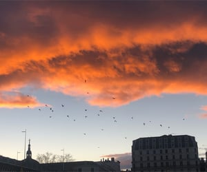 aesthetic, birds, and city image