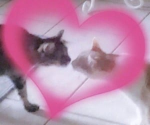 cat, cats, and couple image