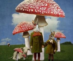 mushroom and rabbit image