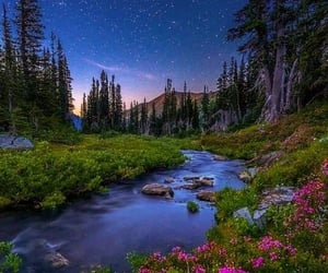 nature, flowers, and stars image