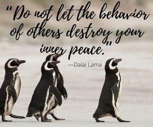 dalai lama, destroy, and behavior image