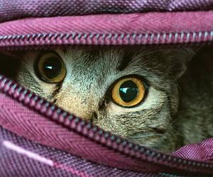 animal, hide and seek, and beautiful image