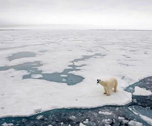 bear, europe, and glacier image