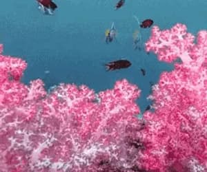 aesthetic, gif, and sea life image