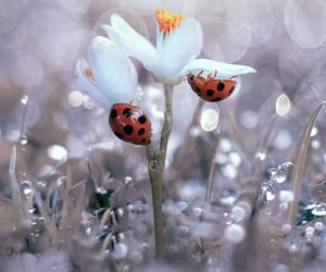 flowers, insect, and ladybugs image