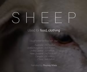 abuse, animal cruelty, and clothing image