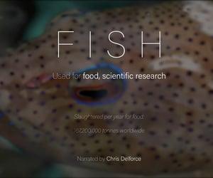 animal cruelty, fish, and fishing image