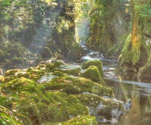 fairy, nature, and cottagecore image