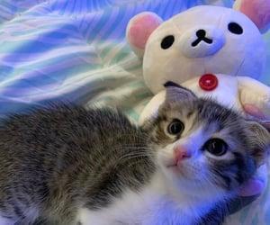 animal, anime, and baby image