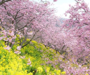 spring, 桜, and instagram image