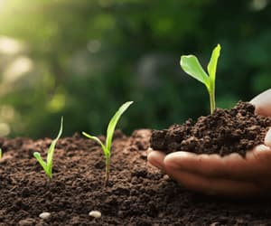 organic farming, organic fertilizers, and soil health boosters image