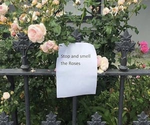 flowers, quote, and rose image