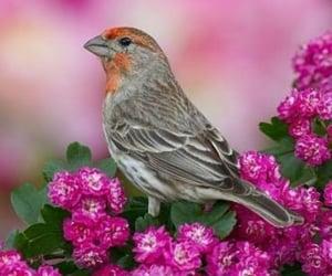 animals, bird, and nature image