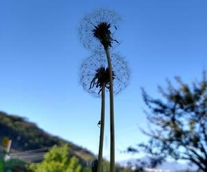 flor, natureza, and florianopolis image
