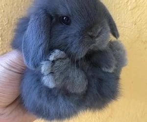 animal, bunny, and pretty image