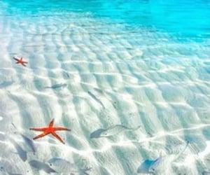 bahamas, blue, and starfish image
