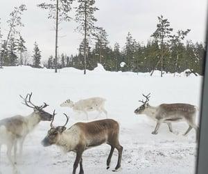 deer, north, and sweden image