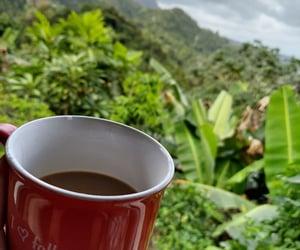 cafe, campo, and mug image