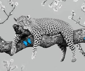 art, cheetah, and color image
