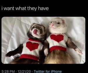 ferret, funny, and laugh image