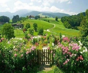 flowers, cottagecore, and garden image
