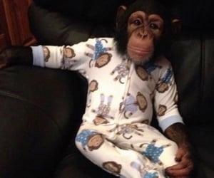 monkey, swag, and monke image