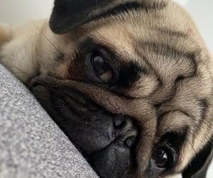 dog, sweet, and fun image