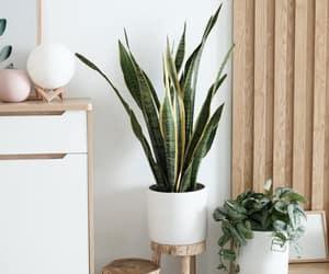 decor, plant, and roomdecor image