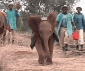 animals, baby, and elephant image