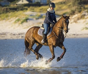 horse, horse riding, and horse show image