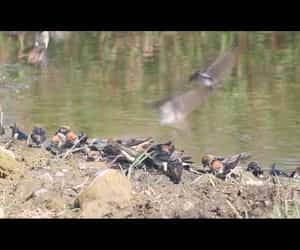 birds, video, and house martins image