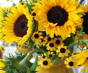 gorgeous, sunflower, and photograph image