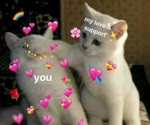 cat, laugh, and memes image