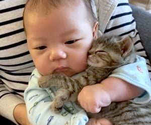 animals, asian, and cat image