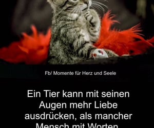 liebe, tiere, and tier image