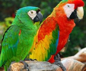 colourful, parrots, and pet image