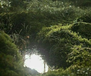 green, nature, and pond image