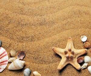 beach, season, and shell image