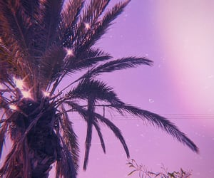 palm trees, aesthetic, and pink image