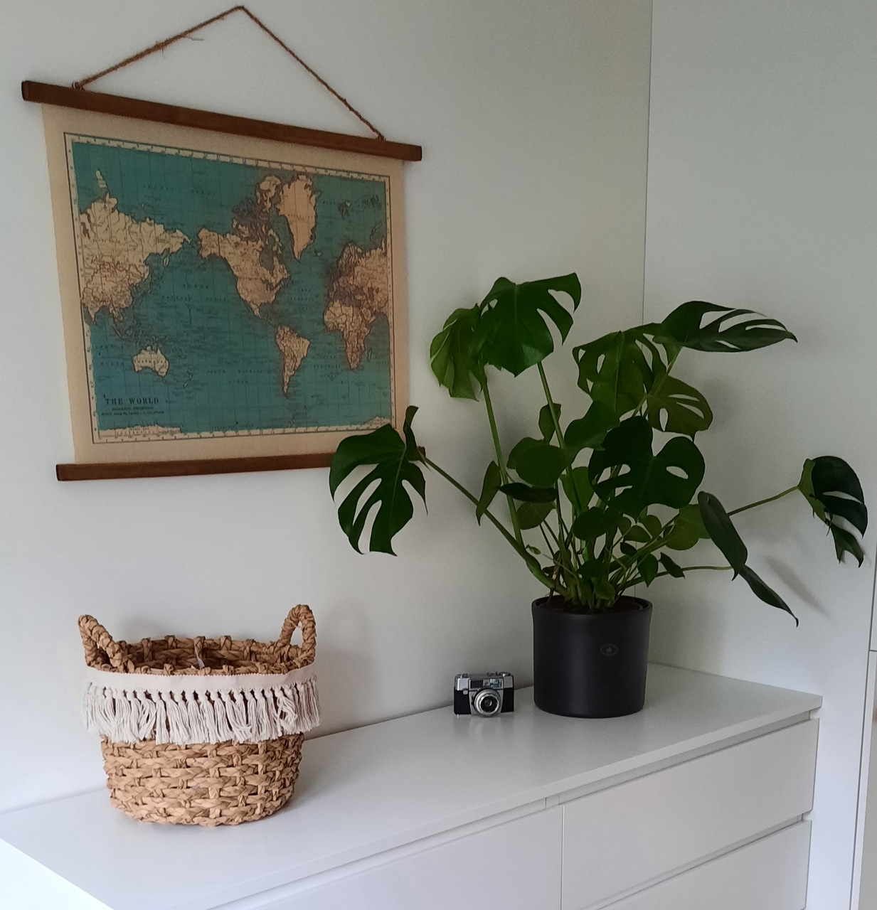 apartment, inspiration, and plant image