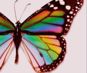 butterfly and rainbow image