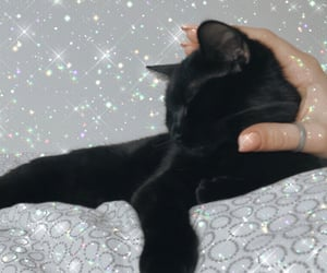 cat, girly, and sparkle image