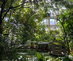 aesthetic, botanical, and botanical garden image